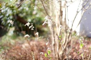 IMG_7515_spring