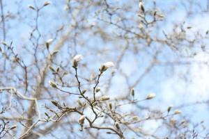 IMG_7529_spring