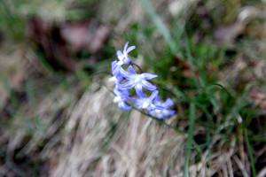 IMG_7536_spring