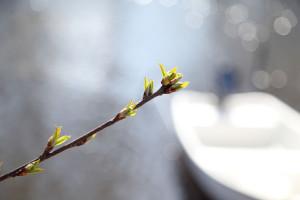 IMG_7566_spring