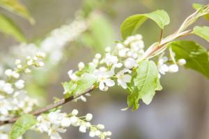 IMG_8191_blomma