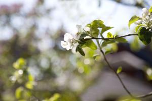 IMG_8409_blomma