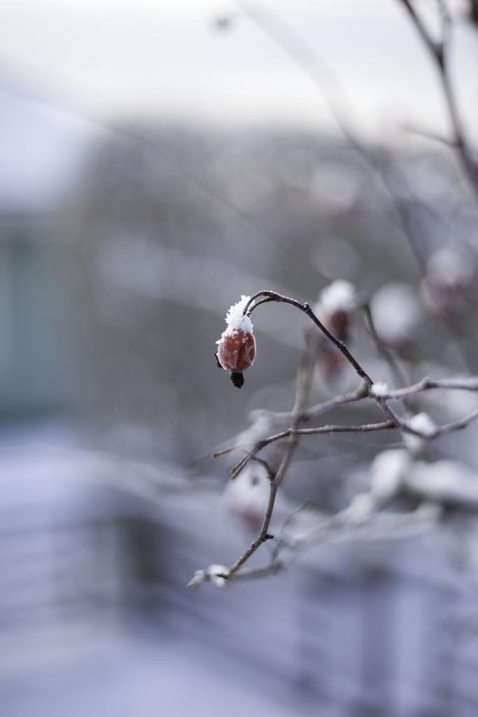 IMG_0850_vinter