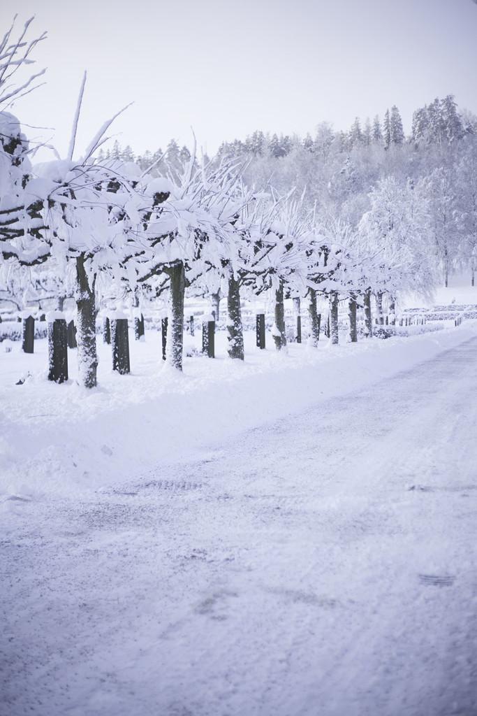 IMG_0867_vinter
