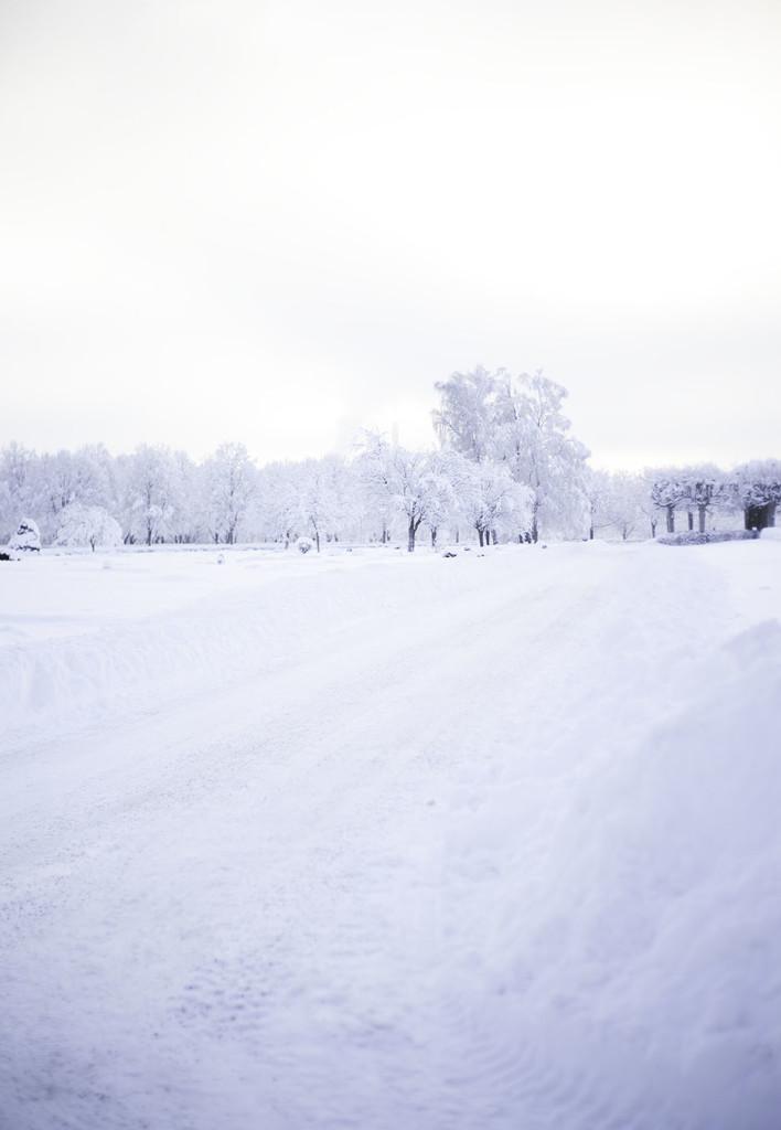 IMG_0869_vinter