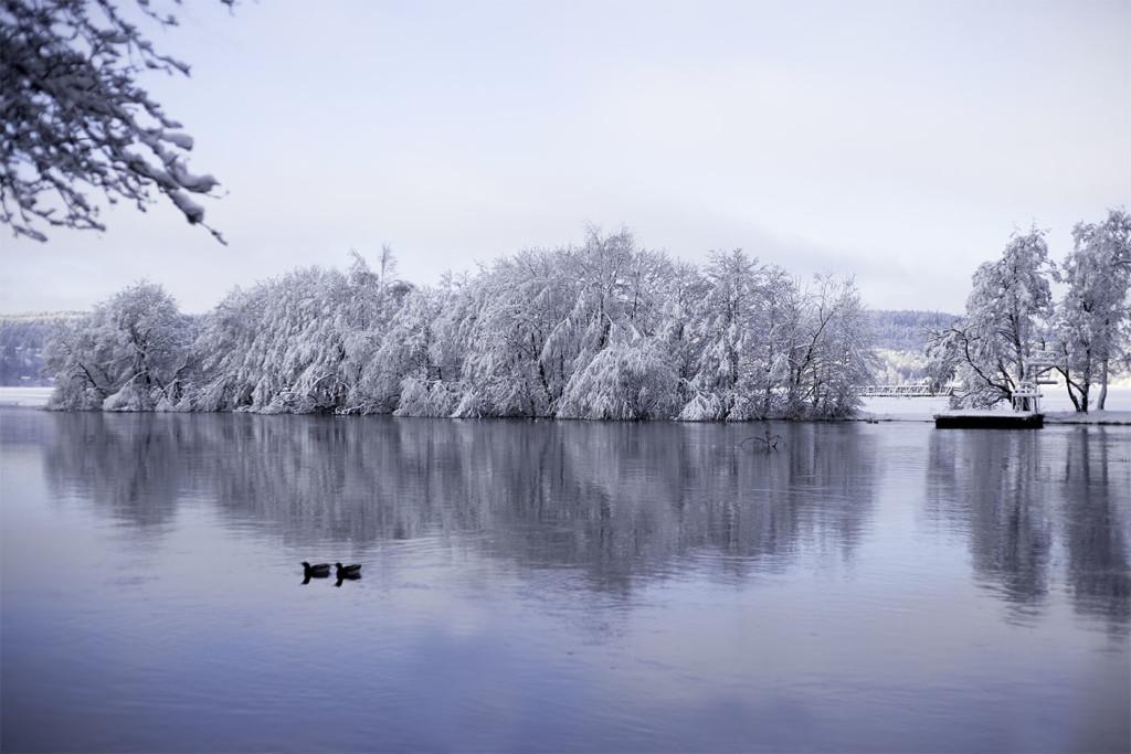IMG_0891_vinter