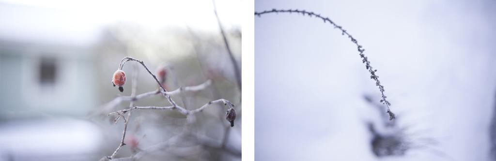 collage_januari