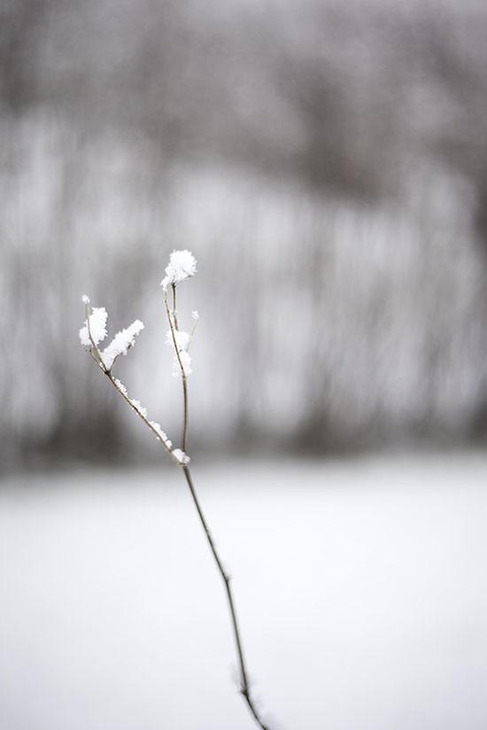 IMG_1249_vinterimars