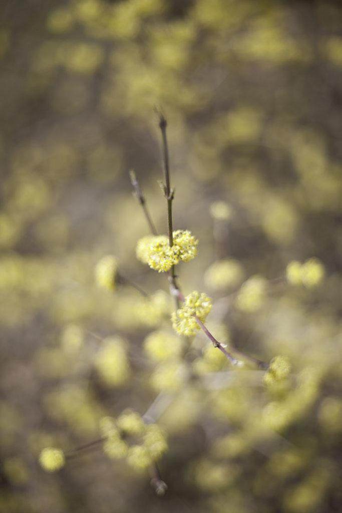 IMG_2585_blomma