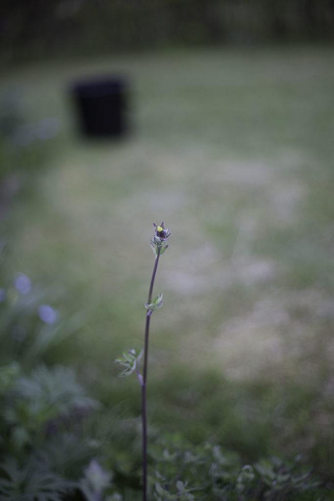 IMG_3083_blomma