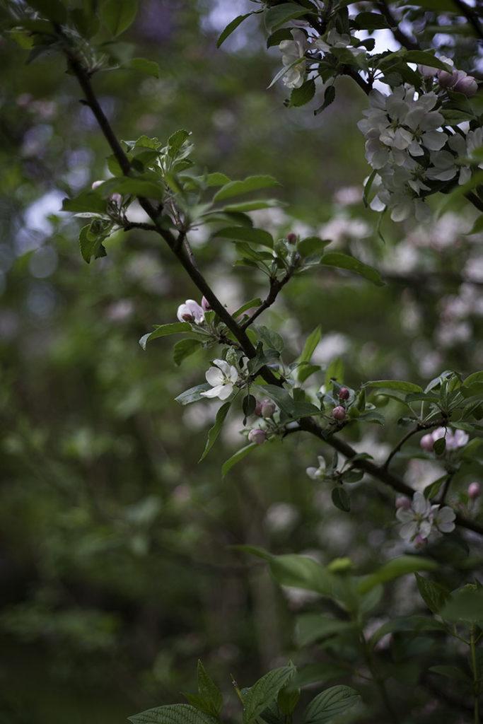 IMG_3122_blomma