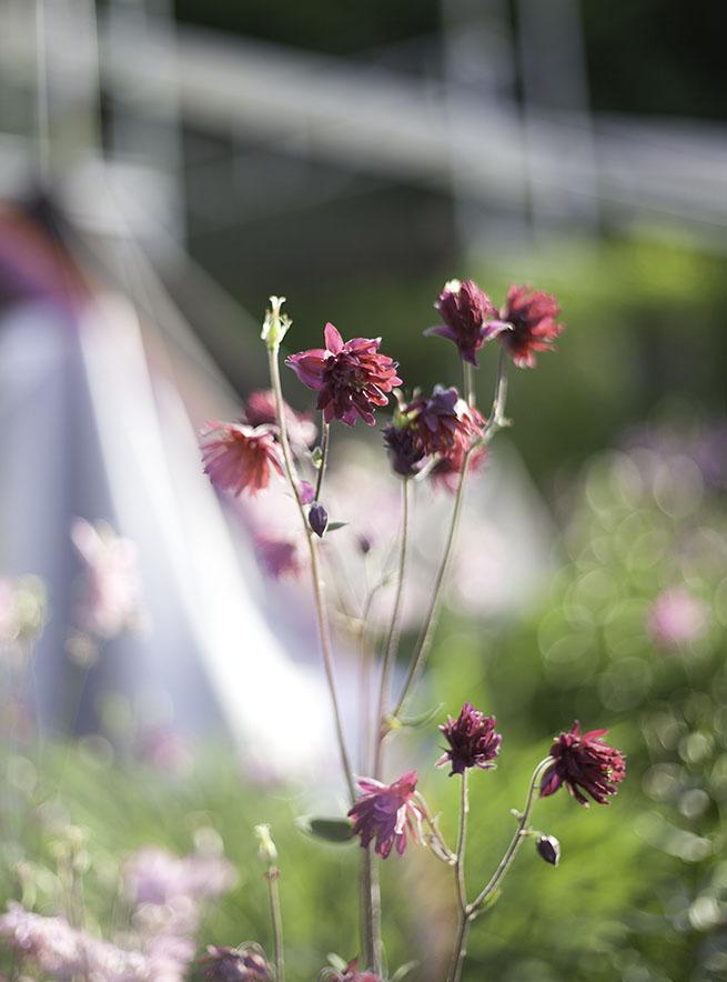 IMG_3351_flower