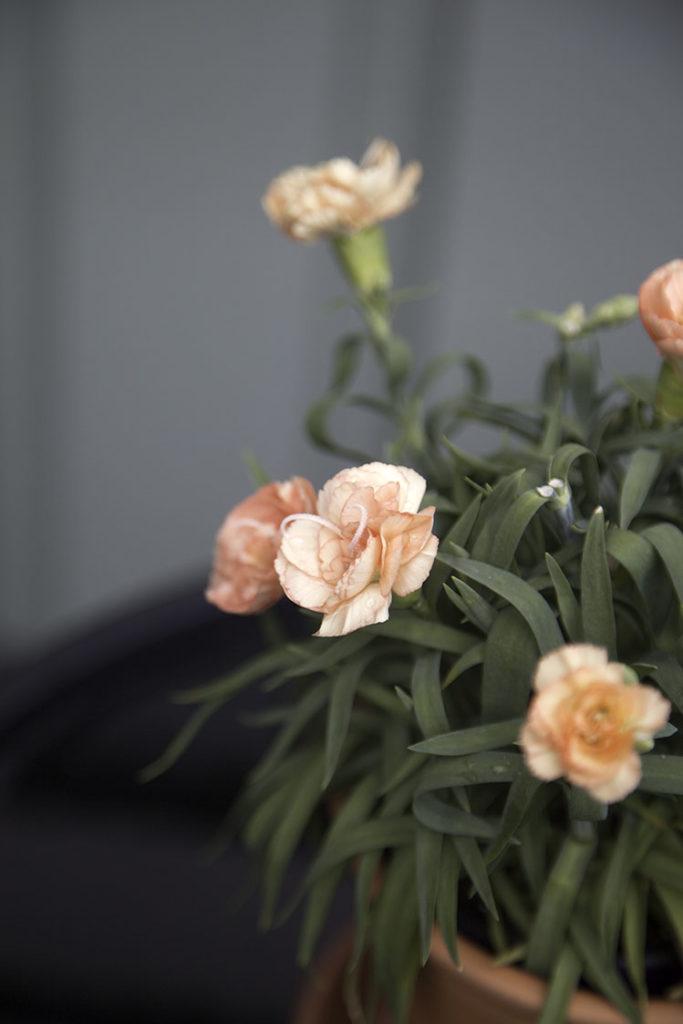 IMG_3926_blomma