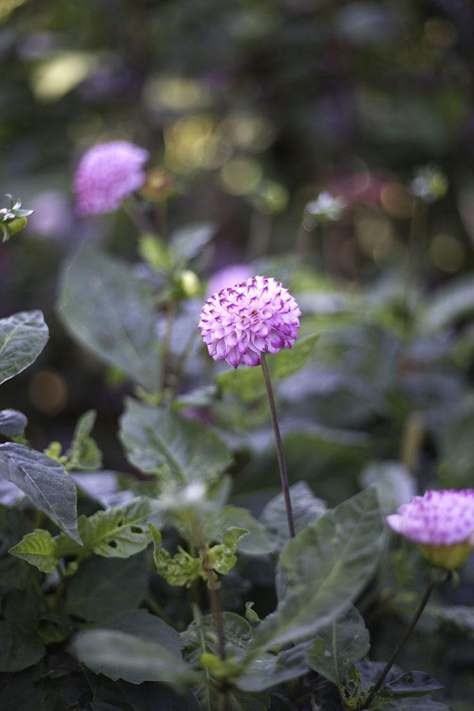 IMG_4641_botaniska