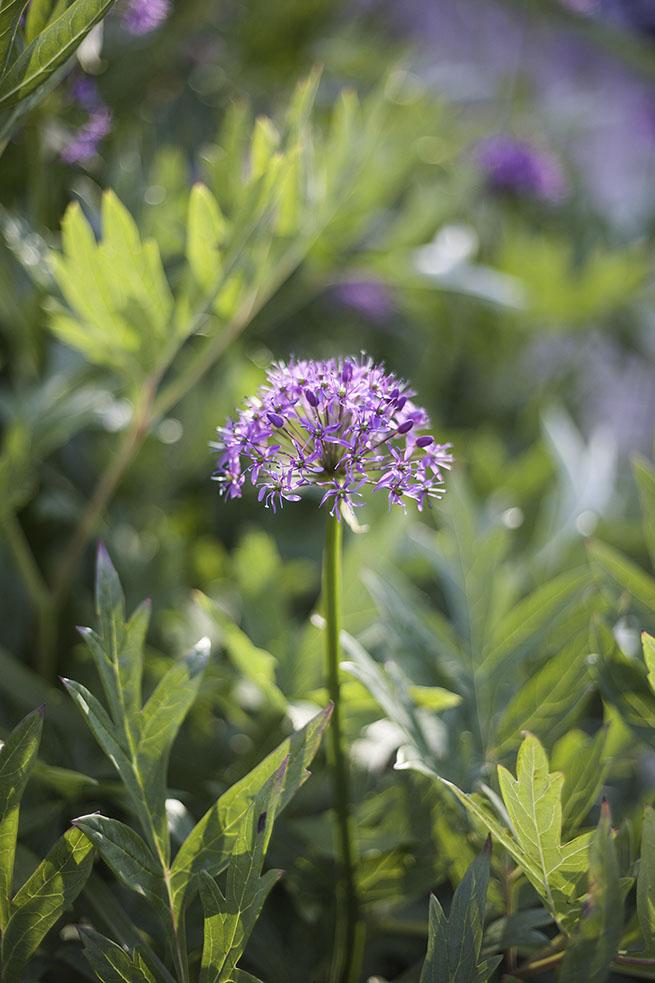 IMG_5044_botaniska