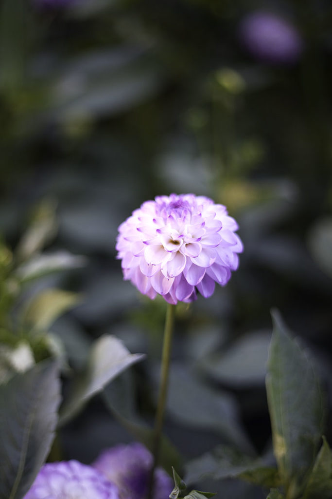 IMG_5102_botaniska