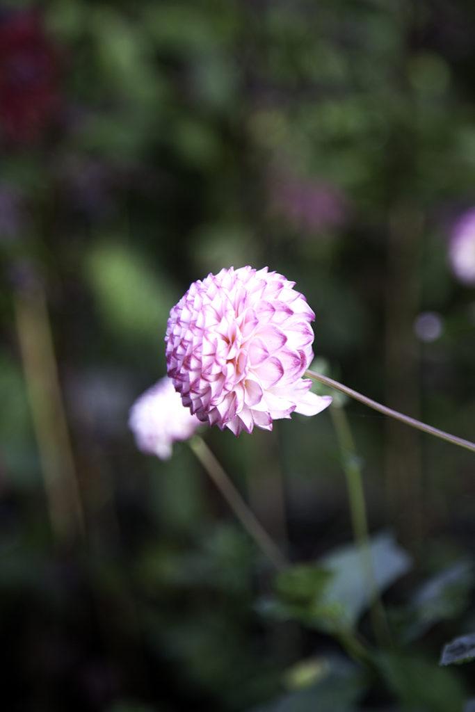 img_5514_botaniska