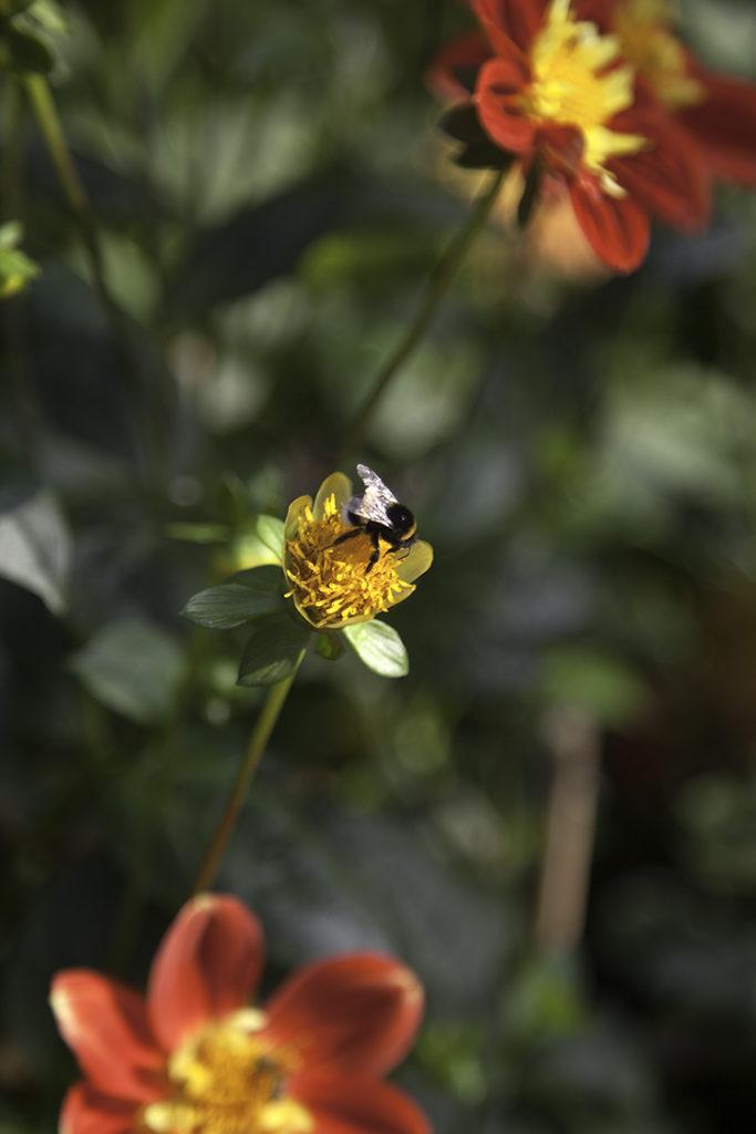 img_5527_botaniska