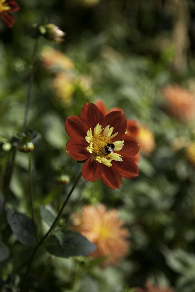 img_5528_botaniska