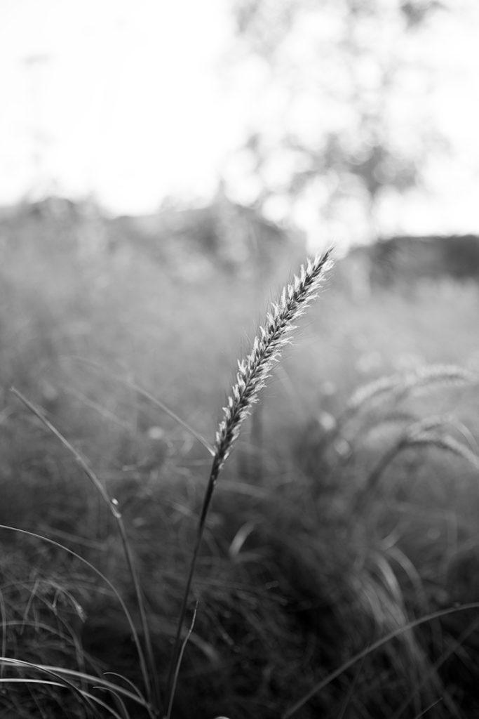 img_5538_botaniska