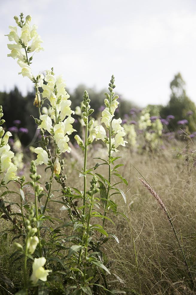 img_5542_botaniska